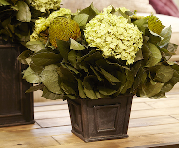 Hydrangea Basil